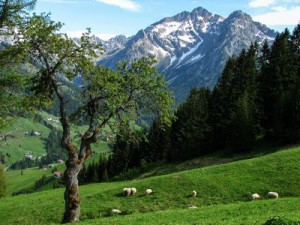 rsz_alpine-1180066